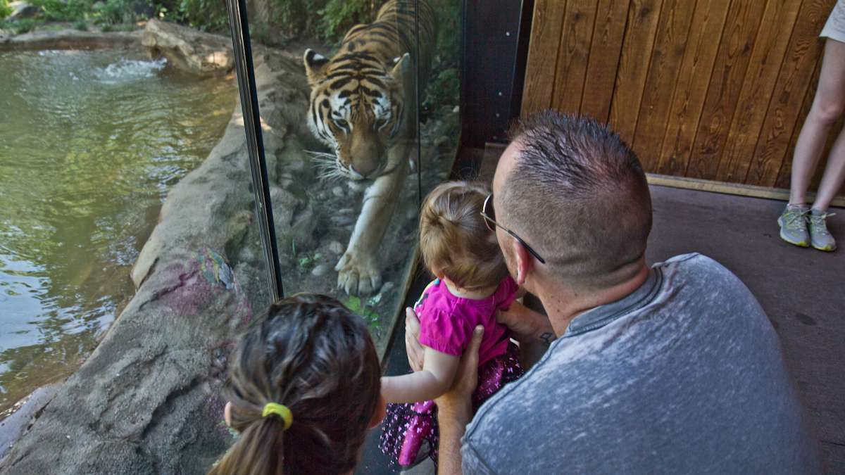 Abigail Colborn celebrates her first birthday with her dad, Bill, and a Siberian tiger.