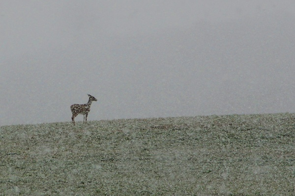 <p>&lt;p&gt;A deer grazes in a snowy field in Millstone Township, N.J., as a nor'easter moves in. (Emma Lee/for NewsWorks)&lt;/p&gt;</p>