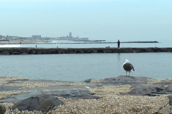 <p><p>A bird and a man take in the scene between Belmar and Avon By the Sea. (Alan Tu/WHYY)</p></p>