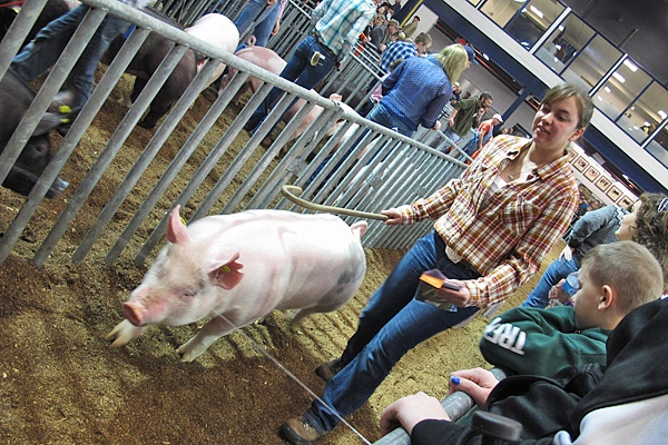 "<p><p><span style=""font-family: Tahoma;"">Swine judging (Mary Wilson/for NewsWorks)</span></p></p>"