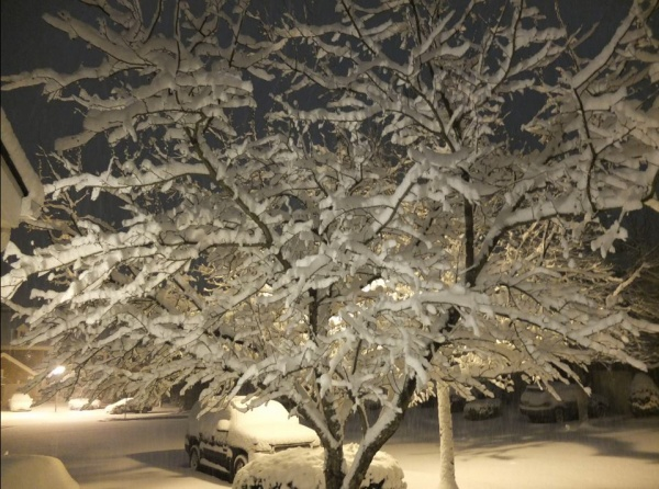 <p><p>Snow covered tree early Saturday 2/9/13 in Princeton, N.J. (Photo courtesy of Evelyn Tu)</p></p>