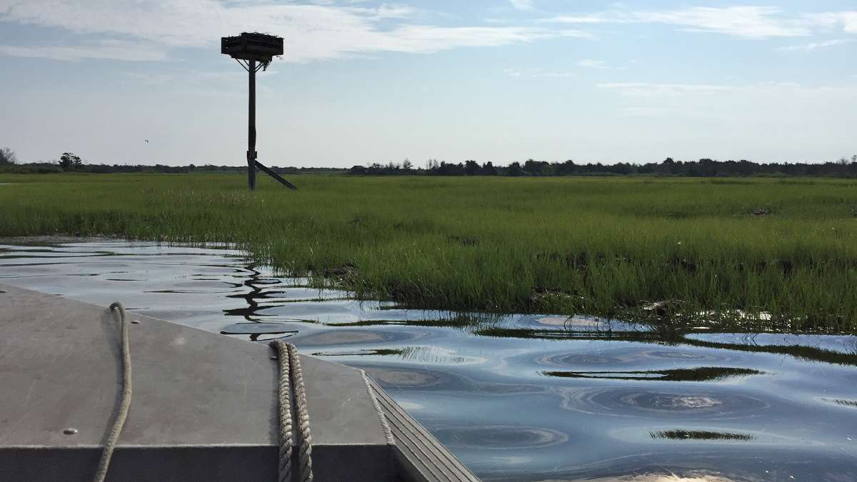 Approaching an osprey nest within Sedges Islands State Wildlife Management Area. (Justin Auciello for WHYY)