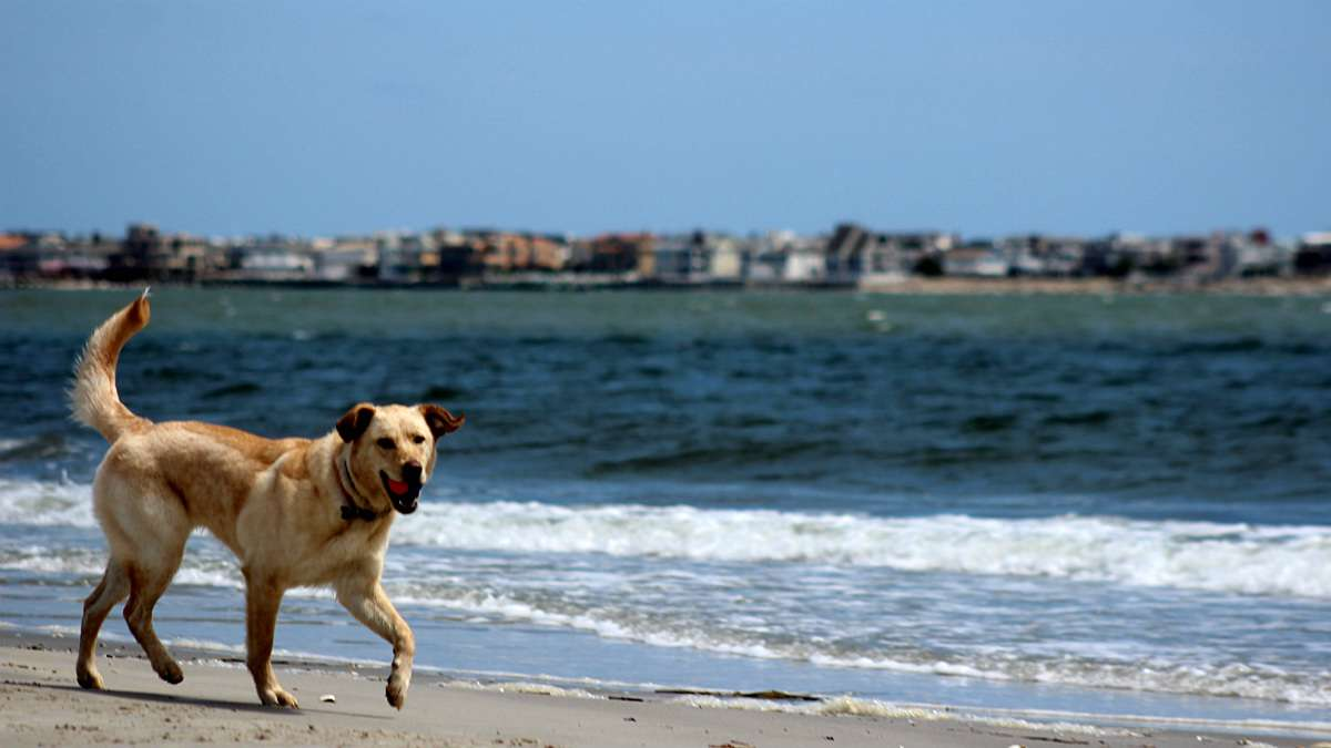 where you can take your dog along the jersey shore lbi cape may whyy