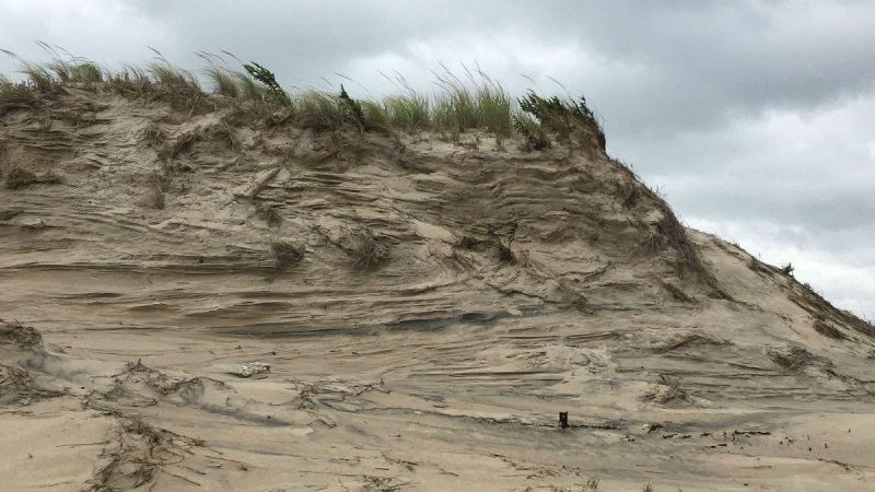 A wind and wave scoured dune south of Dewey Beach.