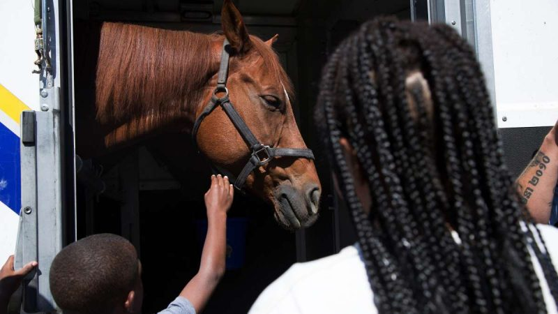 A young boy reaches up to pet a horse that belongs to the Philadelphia Police Department. (Annie Risemberg for NewsWorks)