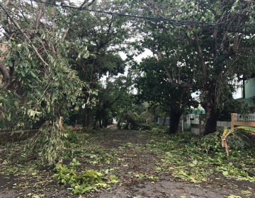 Leaves and tree branches litter a street in Ocean Park, San Juan, Puerto Rico Thursday morning following Hurricane Irma. (Photo: Justin Auciello for WHYY)