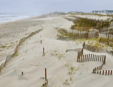 Dunes in Midway Beach, South Seaside Park, New Jersey. (Dominick Solazzo)