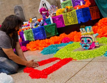 Artist CesarViveros arranges paper petals on the floor of the Day of the Dead altar. (Kimberly Paynter/WHYY)