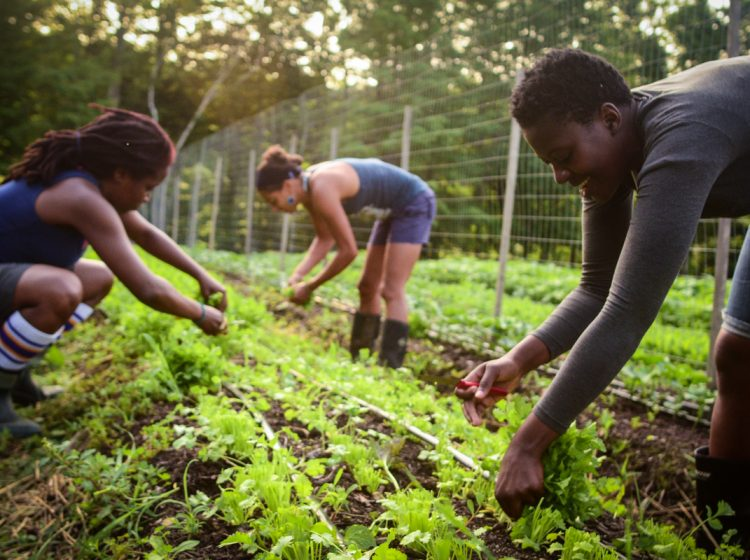 Farmers pick crops at Soul Fire Farm in New York state.