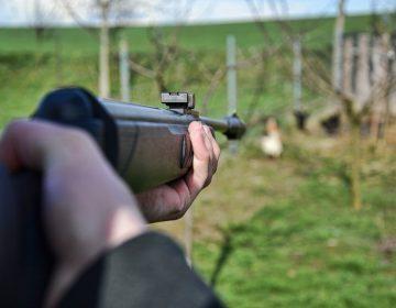 Hunter shooting wild hens.