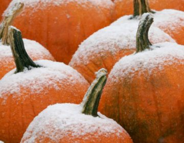 Frosty pumpkins. (Public domain image)