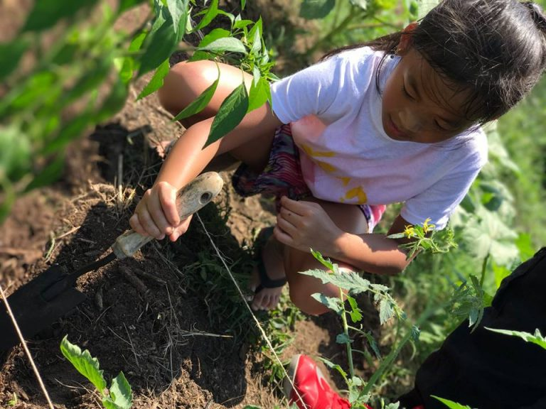 A young girl works in a community garden.