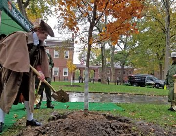 An actor portraying Thomas Jefferson helps plant a new tree in Independence National Historic Park. (Peter Crimmins/WHYY)