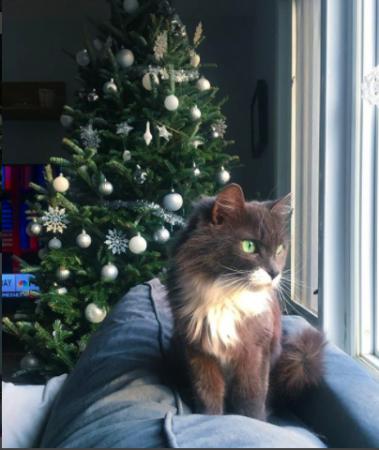 Kitty in Monmouth County. (Photo courtesy of manekeneko via JSHN)