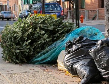 A Christmas tree is shown on a curb with the week's trash.