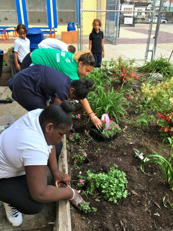 Students plant flowers in the McClure School courtyard.
