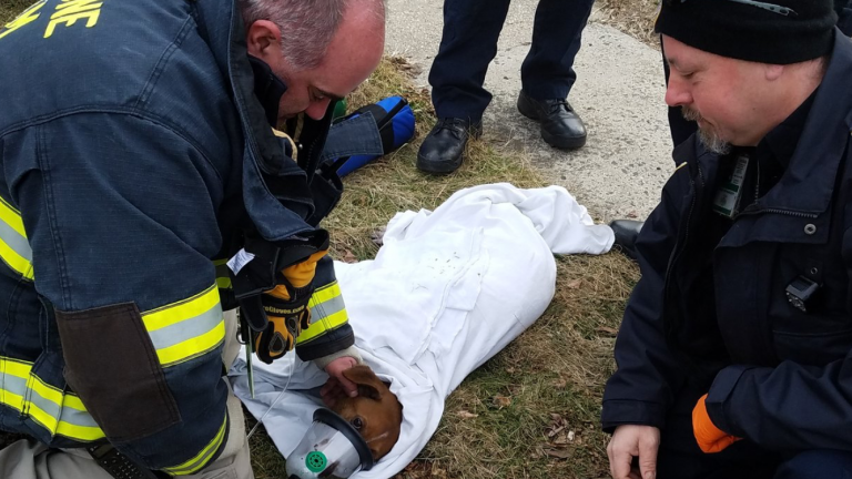 Neptune Township Office of Emergency Management Deputy Coordinator Michael DiLeo and Neptune Township EMS Manager Bil Rosen with a dog they resuscitated Friday in Neptune.