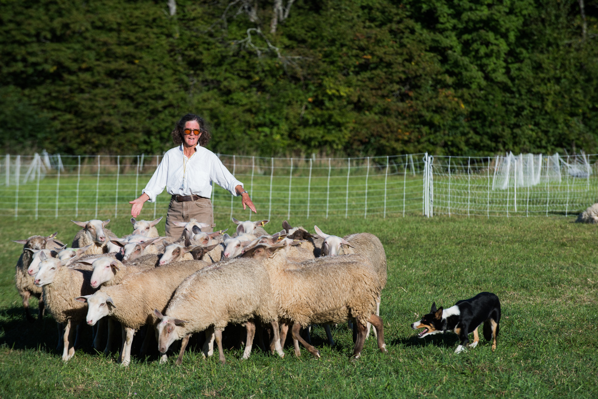 """Choreographed sheep herding will be part of the performance of """"Doggie Hamlet"""" at Fairmount Park during the Philadelphia International Festival of the Arts."""