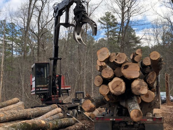 Loggers load up timber cut on Pioneer Forest land outside Eminence, Missouri on Dec. 14, 2017