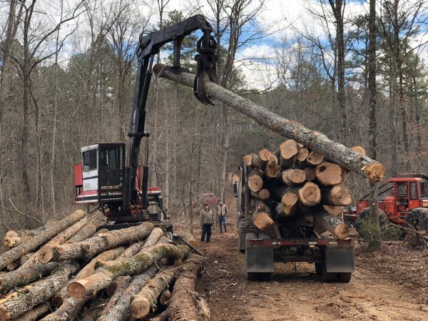 Gene Fisk, Sr. (left) and Jason Green look on as timber is stacked on to a truck in Pioneer Forest outside Eminence, Missouri on Dec. 14, 2017.