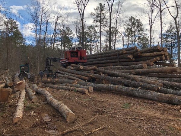 A skidder pulls logs from the forest before they're loaded on to a truck.