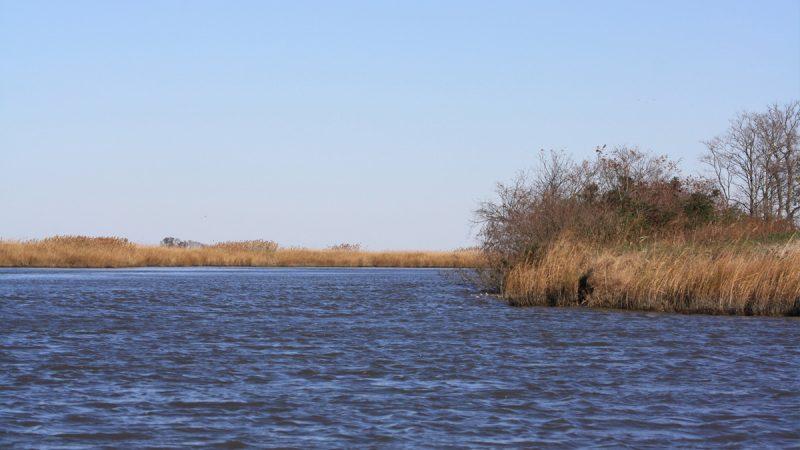 Blackbird Creek (Brian Drouin/WHYY)