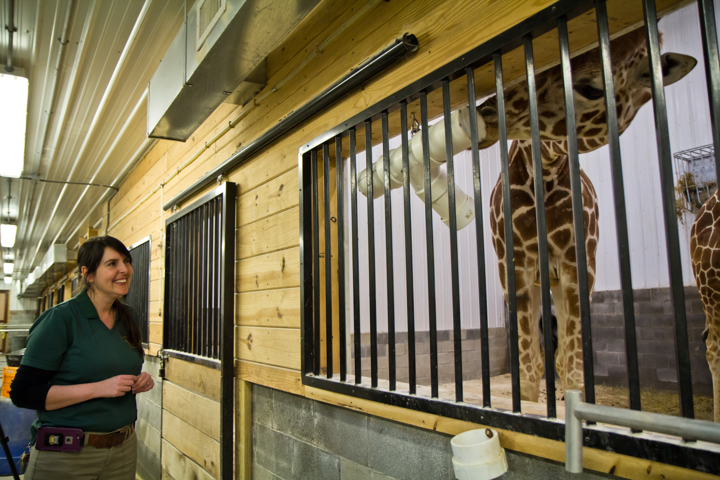 Marina Haynes, General Curator at the Elmwood Park Zoo in Norristown, says that zoo keepers do a lot more than clean animal cages. (