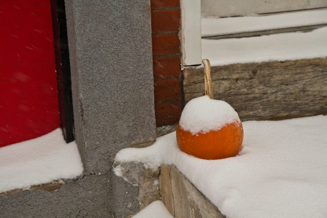 A stoop pumpkin in the snow on Thursday morning. (Kimberly Paynter/WHYY)