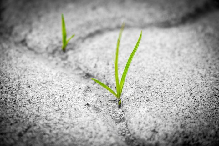 Hope, Hopelessness, and Healing
