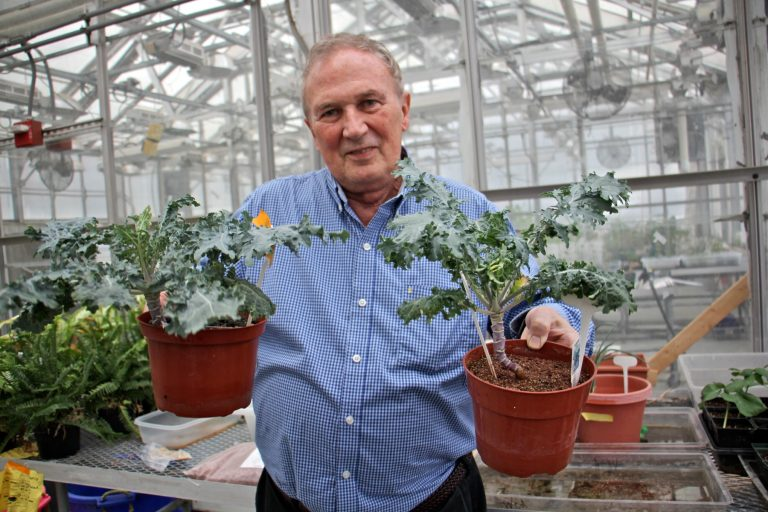 Ed Guinan, a professor of astrophysics and planetary sciences at Villanova University, holds two kale plants grown by his undergraduate students, one grown in Earth soil (left) an the other in a 50 percent mix with Martian soil (right). The kale attempted in 100 percent Martian soil perished.