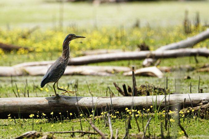 (Andrew Martin/ Delaware Wild Lands)