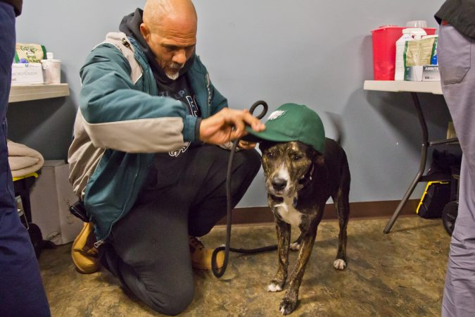 Owner Darryl Gibson prepares his dog Zola to cheer for the Philadelphia Eagles at the Delaware Humane Association's free clinic at the Henrietta Johnson Medical Center in Wilmington. (Kimberly Paynter/WHYY)