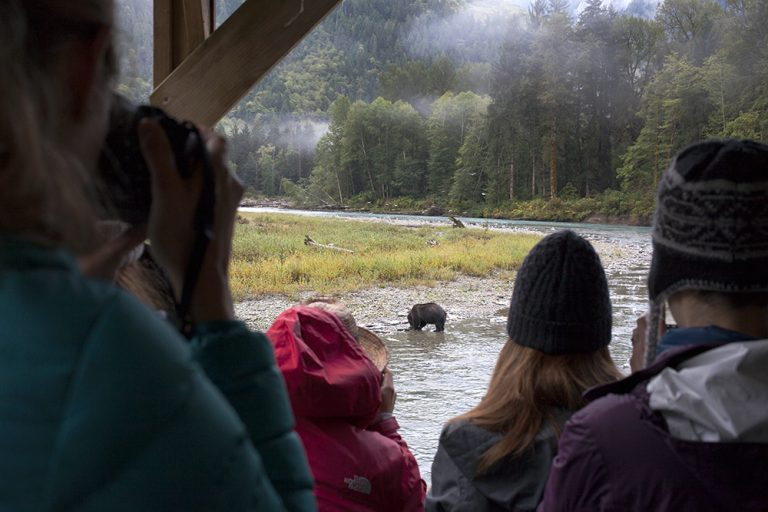 Visitors watch a bear feasting on salmon. The Homalco Nation has invested in a wildlife viewing operation on its territory.