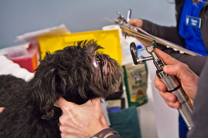Molly, 8, receives an eye exam at the Delaware Humane Association's free clinic at the Henrietta Johnson Medical Center in Wilmington. (Kimberly Paynter/WHYY)