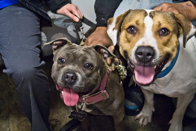Parta, 2, and Snoop, 4, await examinations  at the Delaware Humane Association's free clinic at the Henrietta Johnson Medical Center in Wilmington. (Kimberly Paynter/WHYY)