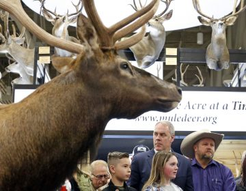 U.S. Interior Secretary Ryan Zinke looks on before speaking at the Western Conservation and Hunting Expo Friday, Feb. 9, 2018, in Salt Lake City. Zinke says he's taking steps to improve habitat and migration corridors in Western states for big-game animals such as elk, mule and deer.