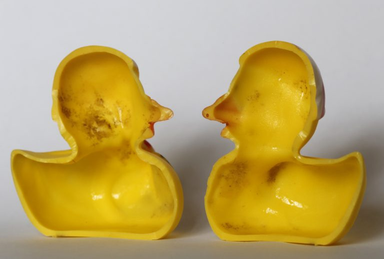 The March 27, 2018 photo shows the inside of a rubber duck after it was cut open for the photo in Nauen, Germany. Swiss researchers now say the cute, yellow bath-time friends harbor a dirty secret: Microbes swimming inside.  (Ferdinand Ostrop/AP Photo)