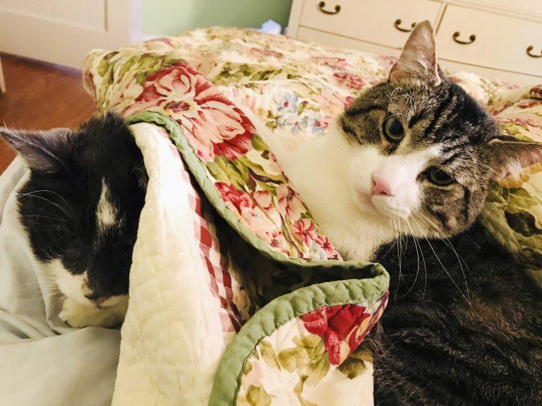 Baltimore cat, 17, has $19,000 kidney transplant at Penn - WHYY