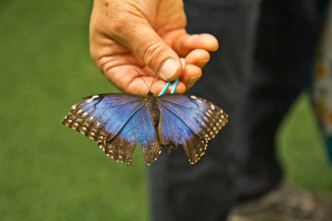 Visitors interact with butterflies at the Philadelphia Flower Show's Butterfly Experience. (Kimberly Paynter/WHYY)