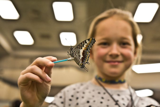 Alexandra Rimska feeds a butterfly nectar at the Philadelphia Flower Show's Butterfly Experience. (Kimberly Paynter/WHYY)