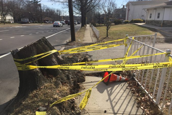 A broken-up sidewalk around a downed tree presents a minor obstacle to hikers. (Image courtesy of J.J. Tiziou)
