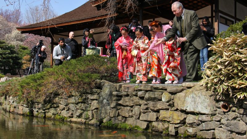 Joseph Zuritsky (right) who donated his prized koi fish to the Shofuso Japanese House and Garden in Fairmount Park, tosses food to the koi with students from the Japanese Language School of Philadelphia. (Emma Lee/WHYY)