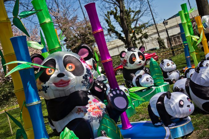 The pandas are one of only two lantern sets that return for the 2018 festival. (Kimberly Paynter/WHYY)