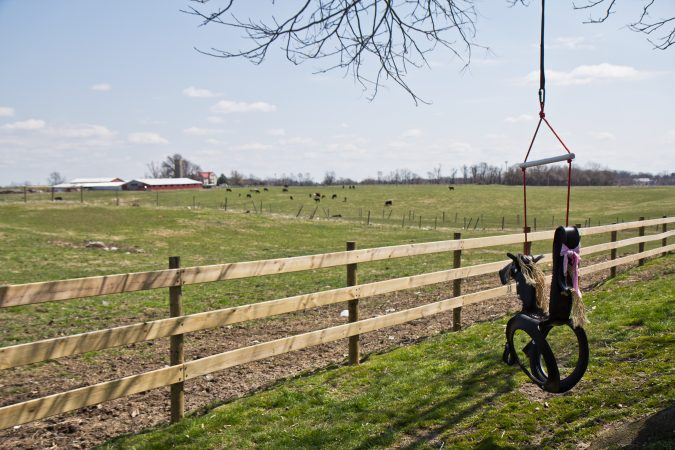 Cows in the pasture in Pilesgrove Township, N.J. (Kimberly Paynter/WHYY)