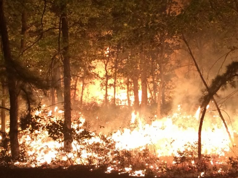 A scene from a wildfire along the border of New Jersey's Woodland and Manchester townships in Sept. 2015. (NJFFS photo)