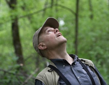 Pennsylvania Nature Conservancy executive director Bill Kunze looks for birds at the John Heinz National Wildlife Refuge in Philadelphia during the annual spring migration. (Emma Lee/WHYY)