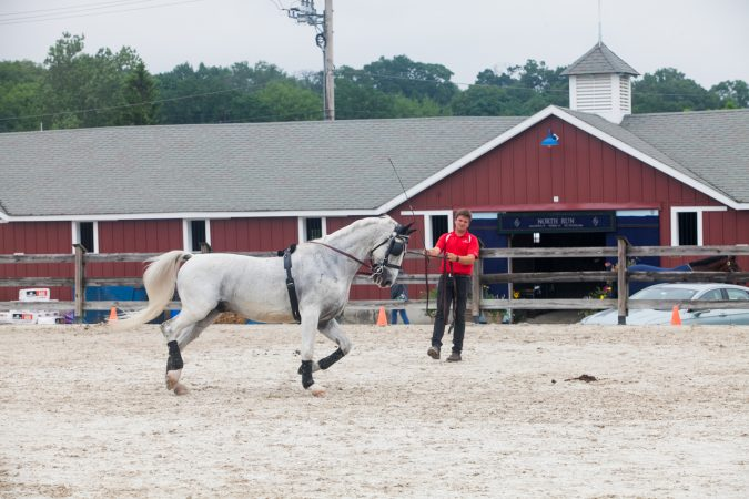 A trainer warms up a horse at the Devon Horse Show. (Brad Larrison for WHYY)