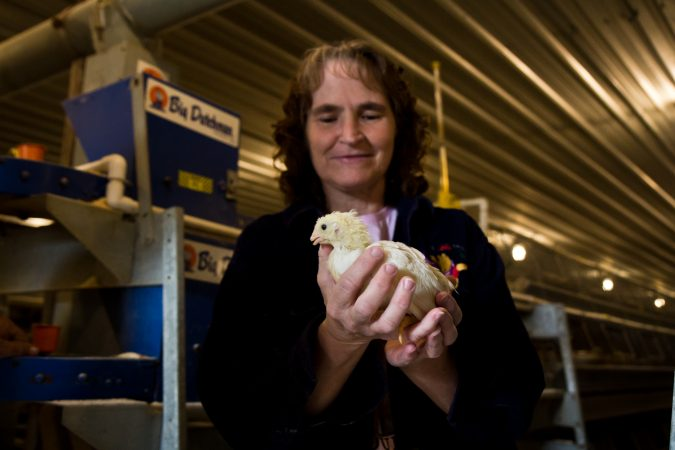 Lori Hunsberger holds a three week-old chicken at the Hunsberger farm. (Kimberly Paynter/WHYY)