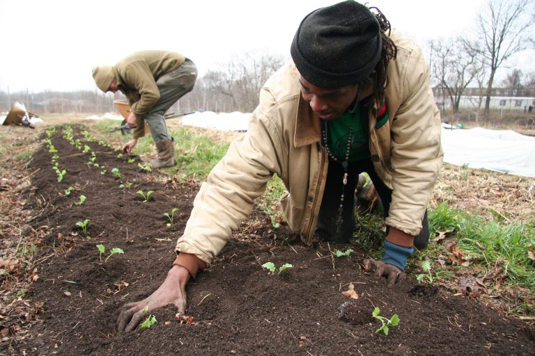 Chris Bolden-Newsome puts new seedlings into a row. (Alan Yu/WHYY)