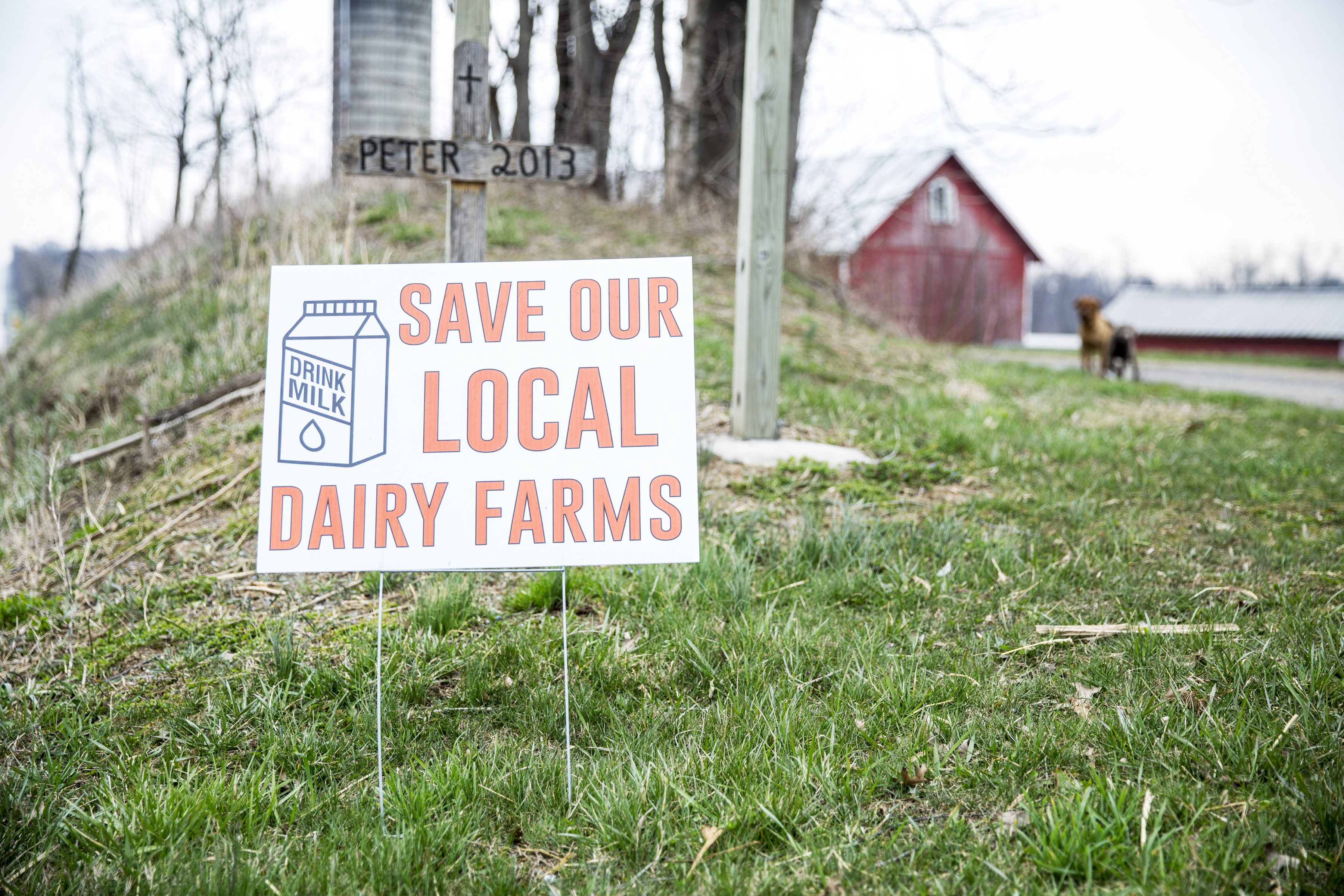 "A yard sign that reads ""SAVE OUR LOCAL DAIRY FARMS"" stand outside Reed's Creek Farm in Lebanon, Pennsylvania. Dairy farmers hope consumers would choose to buy milk locally to support them."
